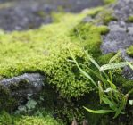 Terrific moss image in Nature and Landscapes category at pixy.org